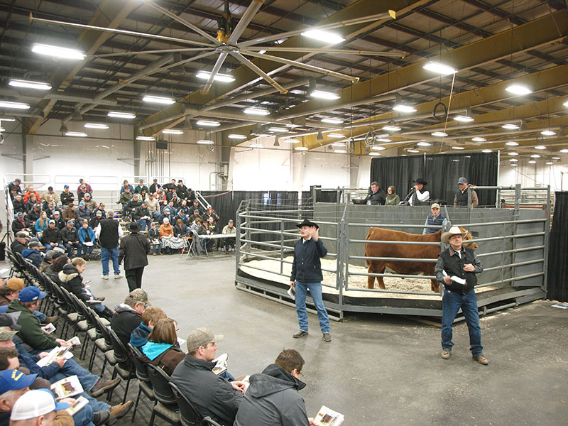 Canadian Bull Congress Auction House